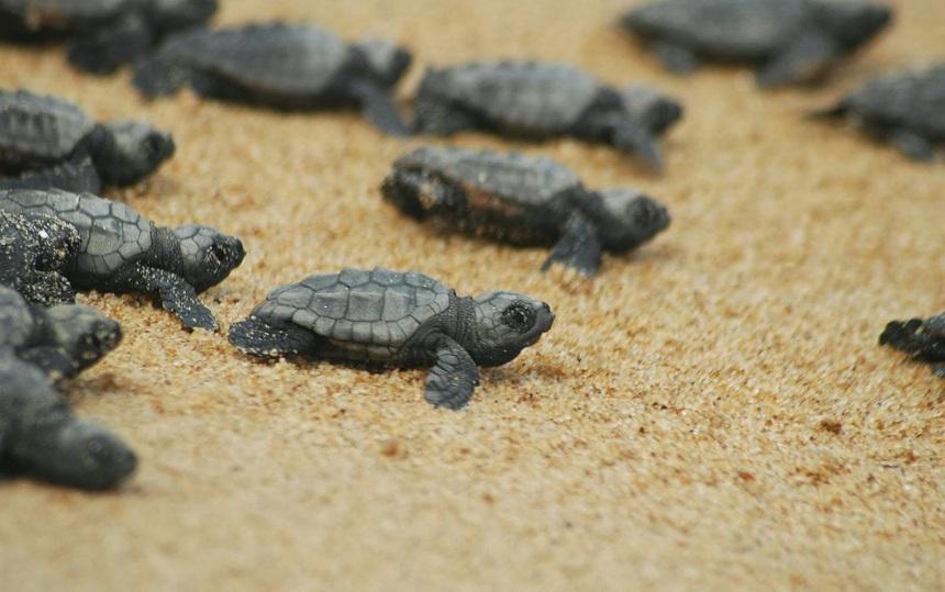 Приют для черепах турция