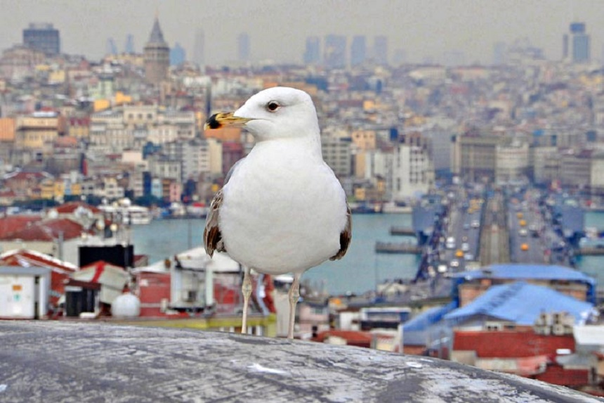 Стамбул - единственный город в мире, построенный на двух континентах
