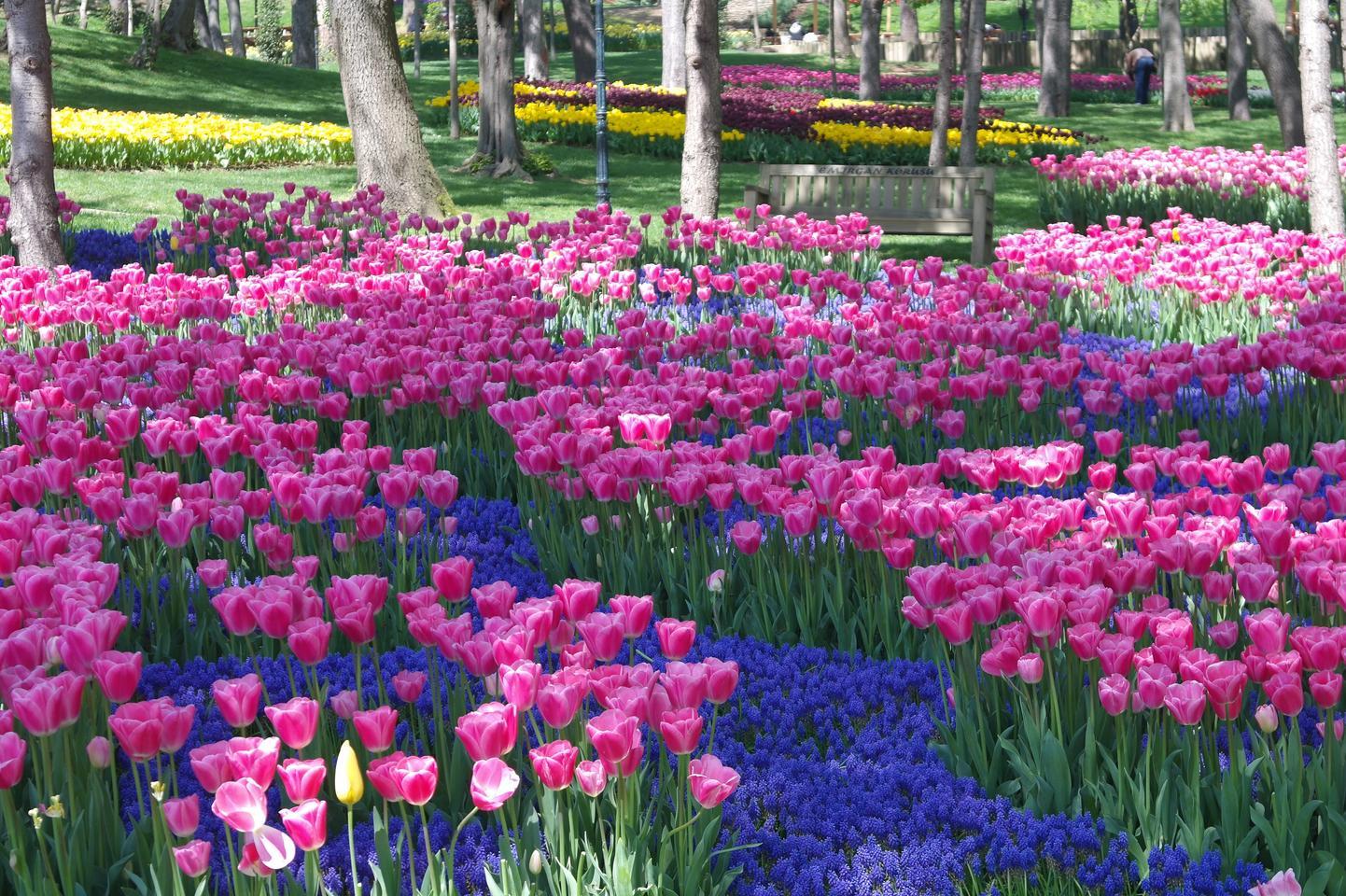 Фото фестиваля тюльпанов