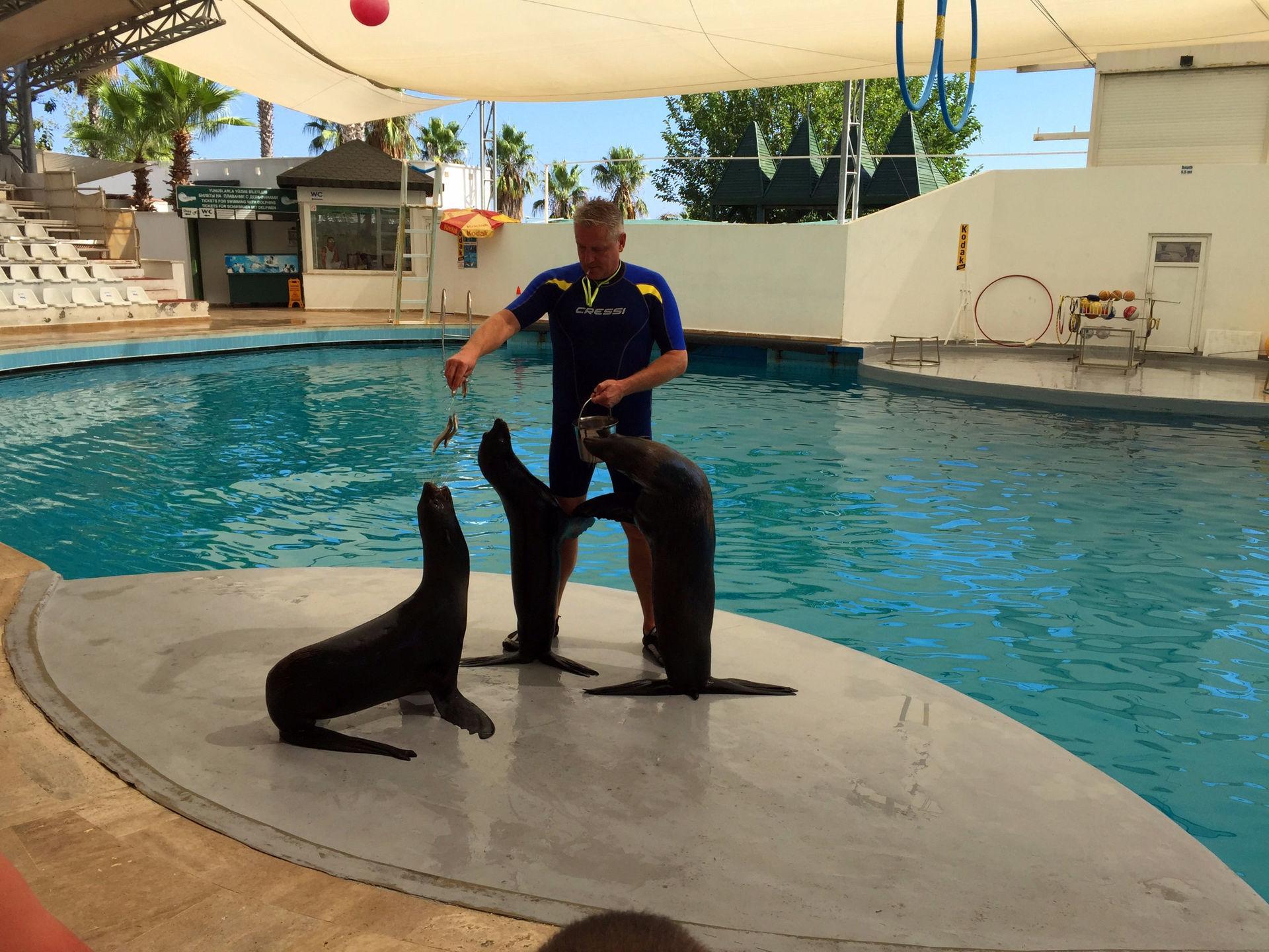 Фото дельфинария Sealanya