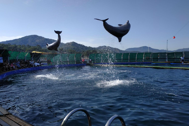 Фото дельфинария в Кемере