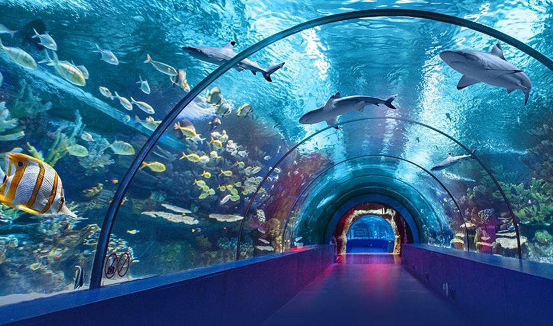 Фото океанариума в Кемере