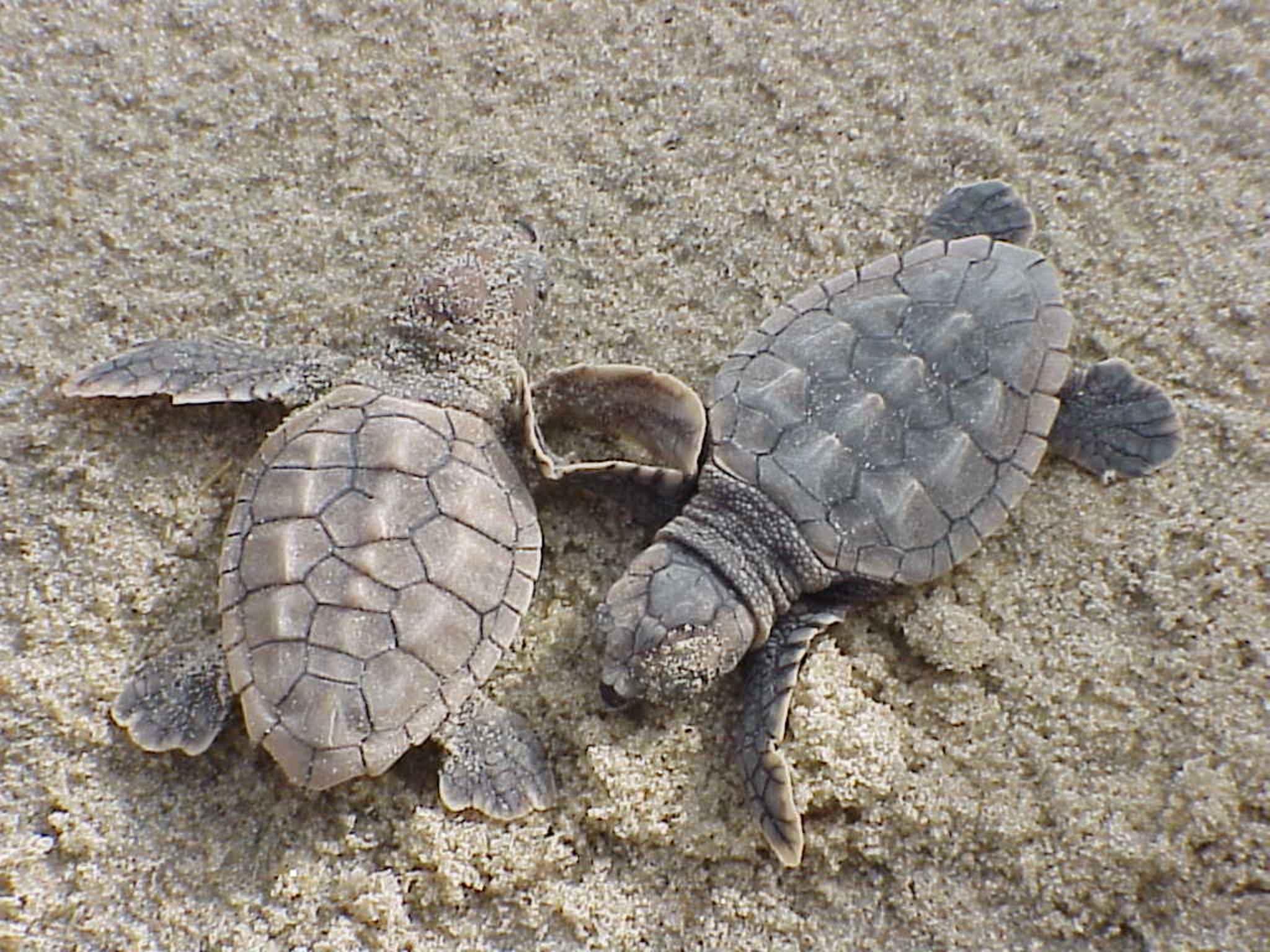 Фото морских черепах на берегу
