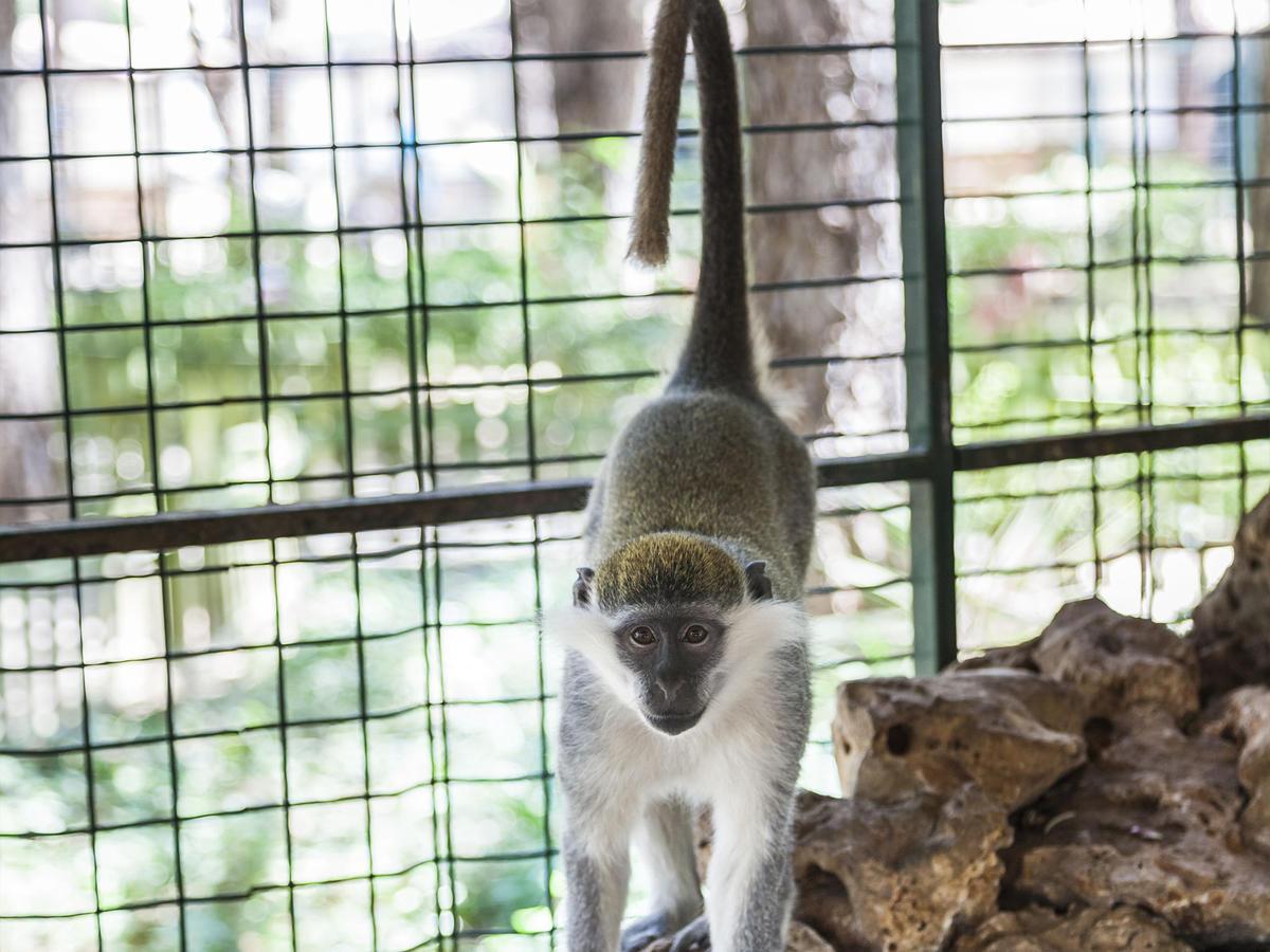 Фото зоопарка Беллис