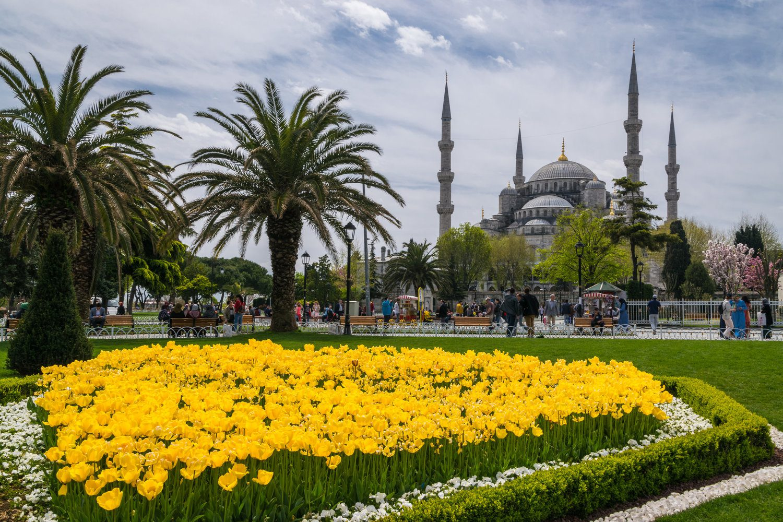 фото Тюльпаны в Турции